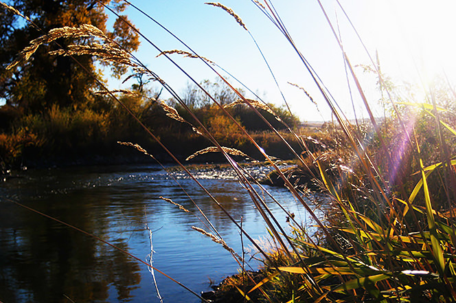 Afternoon on the Gallatin River near Bozeman, Montana
