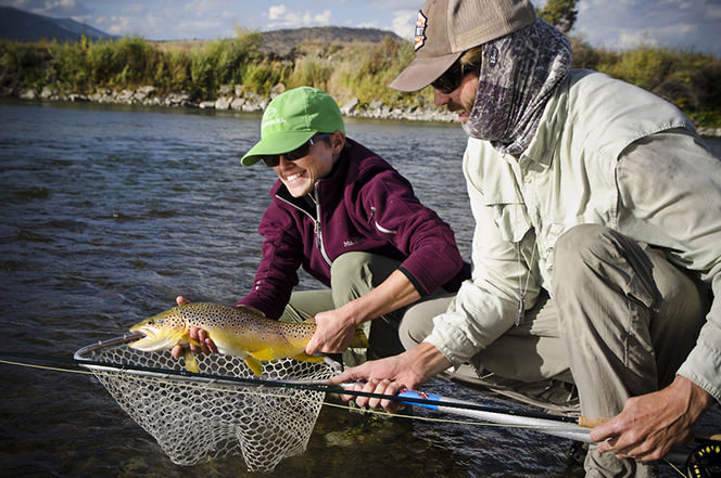 Releasing Wild Brown Trout Jefferson River, Montana
