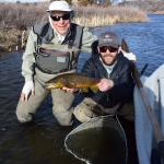 A nice brown from the Lower Madison river in Montana.