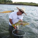 Yellowstone river Brown trout on a grasshopper