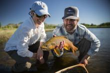 Jefferson river brown trout near Bozeman, Montana.